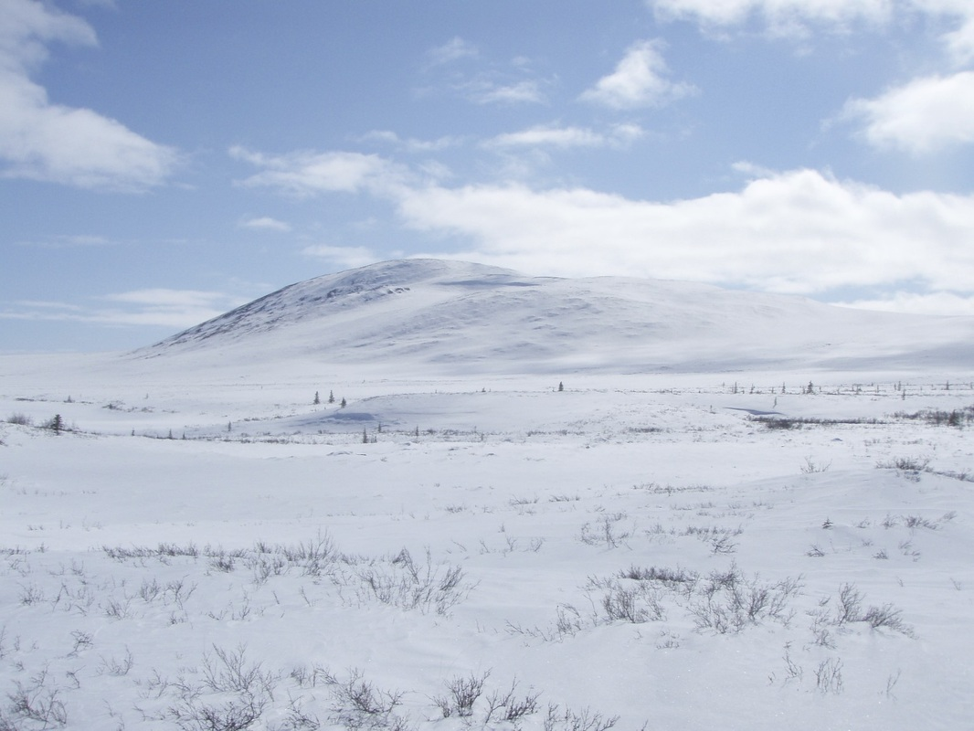 Thearctictundrabiodiversity.weebly on Arctic Ecosystem